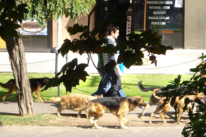 This pack of 7 or 8 neighborhood dogs run past my window several times a day