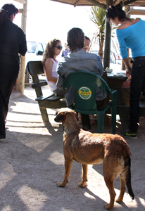 Cats and dogs often wander in and out of casual restaurants