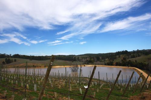 Casa Silva's vineyard in the Colchagua Valley's cold coastal region near Paredones