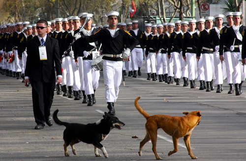 Even the dogs love a good parade