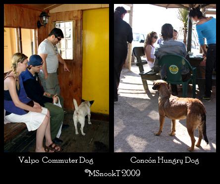 MST2009-Coastal Dogs