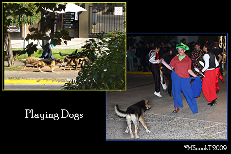 MST2009-Playing Dogs