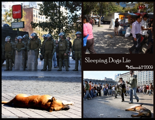 MST2009-Sleeping Dogs Lie