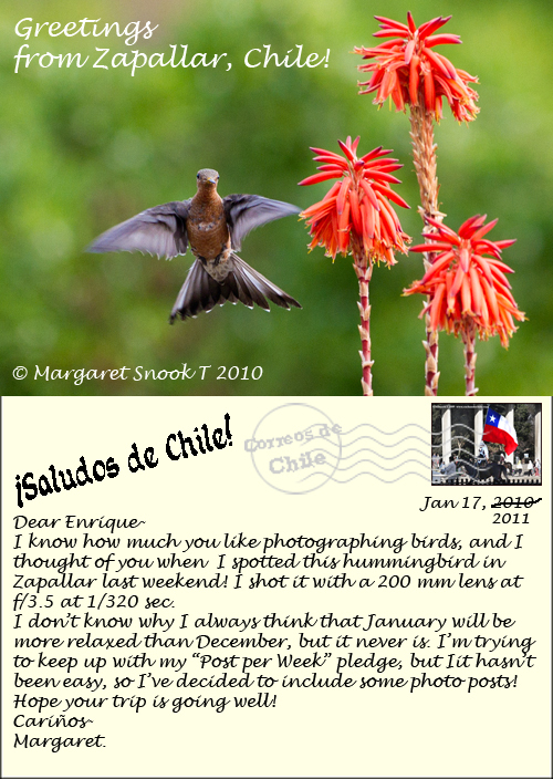 Giant Hummingbird (Picaflor gigante) ©2011 Margaret Snook T