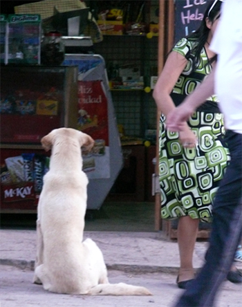Dog and shop in San Pedro de Atacama