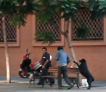 Dog begging in Santiago