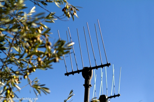 "Special vibrating rakes called ""Olivium"" used for harvesting olives. ©2011 Margaret Snook"