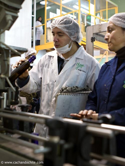 Inspecting bottles. Olave olive oil. ©2011 Margaret Snook